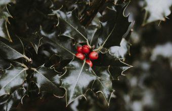 4K Berries Leaves Branch Wallpaper 3840x2160 340x220