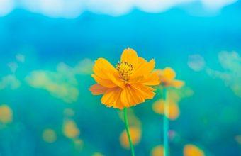 4K Flower Yellow Delicate Wallpaper 3840x2160 340x220