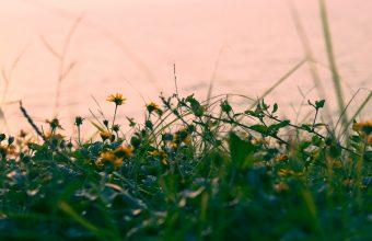 4K Flowers Yellow Grass Wallpaper 3840x2160 340x220