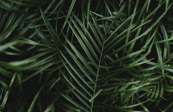 4K Palm Leaves Branches Wallpaper 3840x2160 340x220