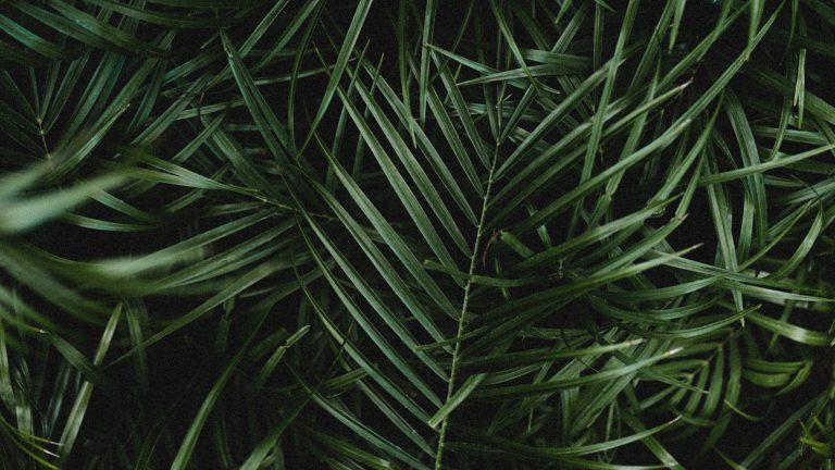 4k Palm Leaves Branches Wallpaper 3840x2160