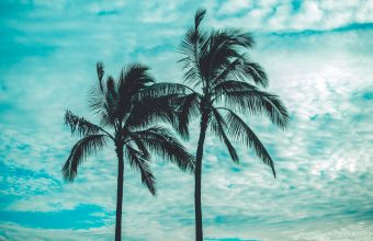 4K Palm Trees Tops Sky Wallpaper 3840x2160 340x220
