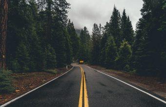 4K Road Marking Trees Wallpaper 3840x2160 340x220