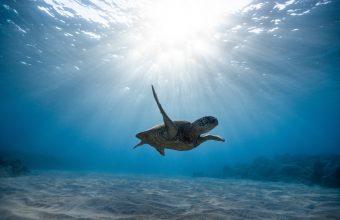 4K Skull Sea Turtle Underwater World Wallpaper 3840x2160 340x220