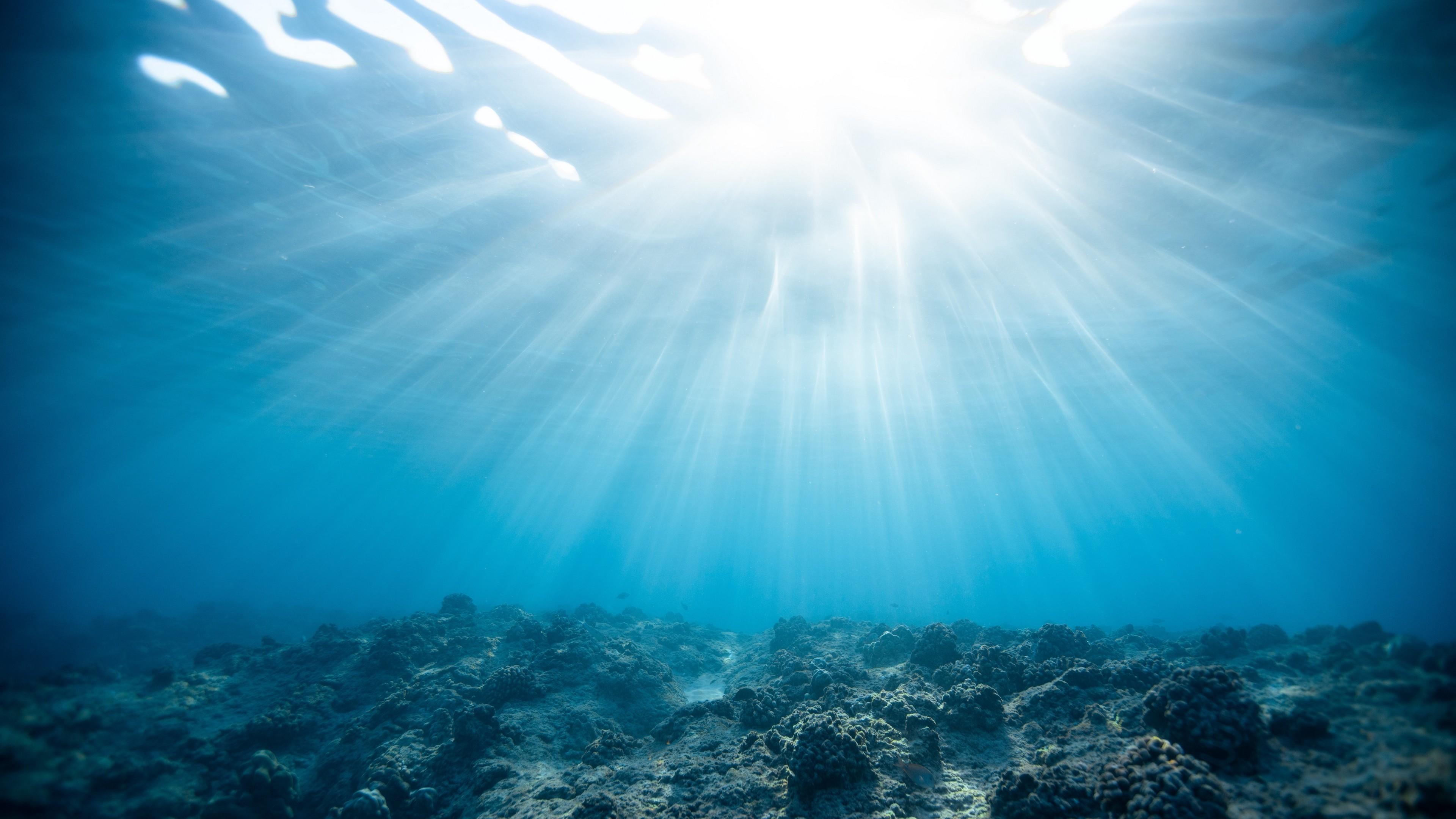4k Underwater World Ocean Corals Wallpaper 3840x2160
