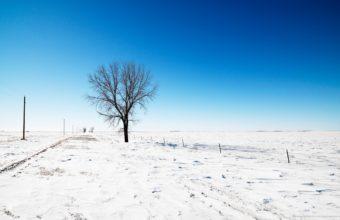 Alone In Snow Wallpaper 2560x1600 340x220
