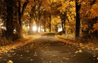 Autumn Breeze Wallpaper 1920x1200 340x220