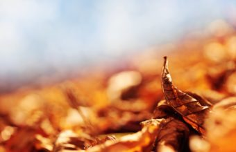 Autumn Dry Leaves Wallpaper 2560x1600 340x220