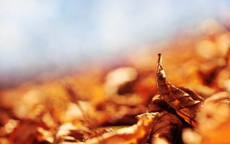 Autumn Dry Leaves Wallpaper 2560x1600 768x480