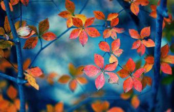 Autumn Fall Trees Wallpaper 1920x1200 340x220