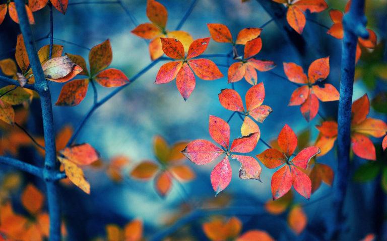 Autumn Fall Trees Wallpaper 1920x1200 768x480