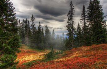 Autumn Fog Trees Wallpaper 2560x1600 340x220