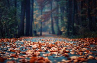 Autumn Foliage In The Park Wallpaper 2560x1600 340x220