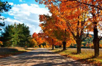 Autumn Lane Wallpaper 1600x1200 340x220