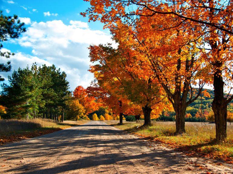 Autumn Lane Wallpaper 1600x1200 768x576