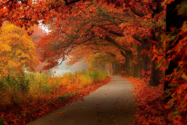 Autumn Leaves Walk Nature Forest Wallpaper 2048x1366 768x512