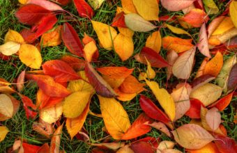 Autumn Leaves Wallpaper 1920x1200 340x220