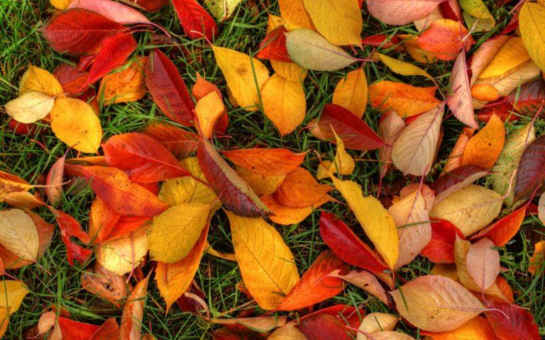 Autumn Leaves Wallpaper 1920x1200 768x480