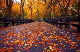 Autumn Nature Park Trees Leaves Road Wallpaper 2880x1800 340x220