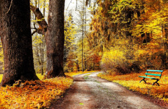 Autumn Park Nature Trees Leaves Road Wallpaper 2880x1800 340x220