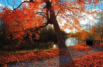 Autumn Park River Wallpaper 1350x900 340x220