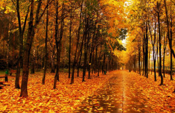 Autumn Park The Avenue Wallpaper 2560x1600 340x220
