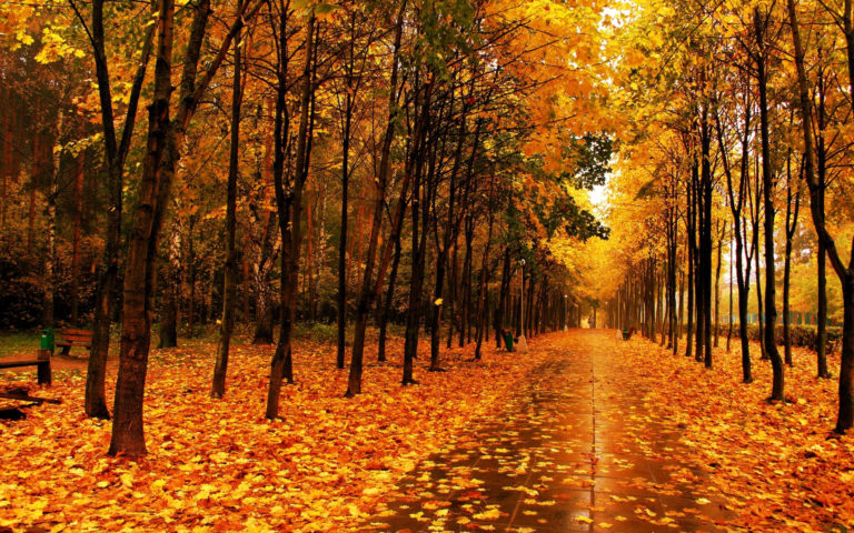 Autumn Park The Avenue Wallpaper 2560x1600 768x480