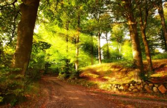 forest wallpapers hd