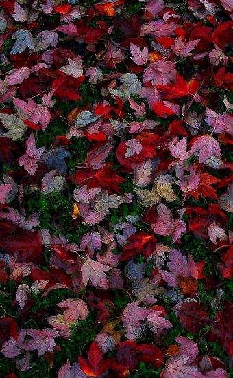 Autumn Phone Wallpaper 002 340x550