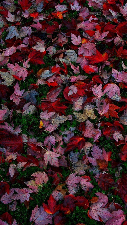 Autumn Phone Wallpaper 002 768x1365