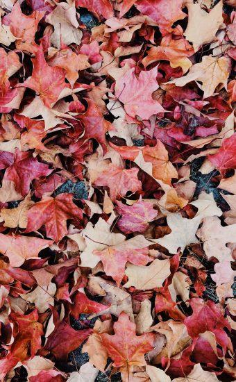 Autumn Phone Wallpaper 005 340x550