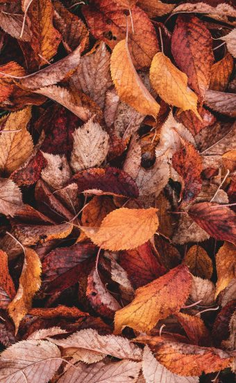 Autumn Phone Wallpaper 009 340x550