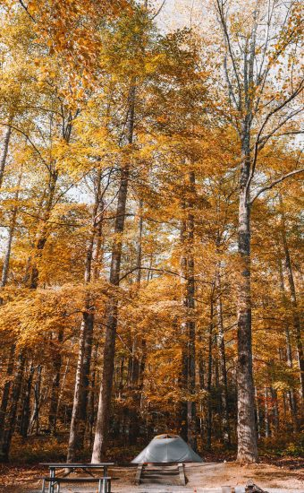 Autumn Phone Wallpaper 012 340x550