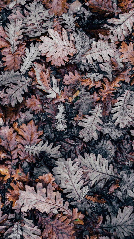 Autumn Phone Wallpaper 015 768x1365