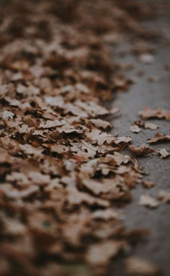 Autumn Phone Wallpaper 016 340x550