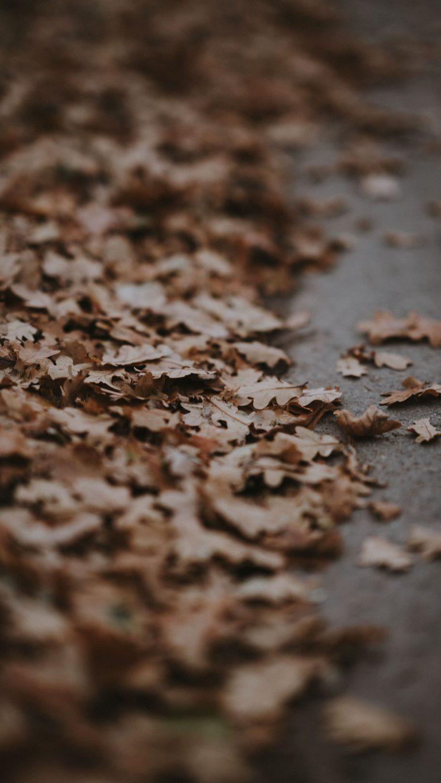 Autumn Phone Wallpaper 016 768x1365