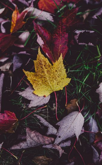 Autumn Phone Wallpaper 018 340x550