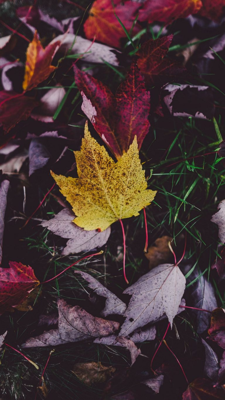 Autumn Phone Wallpaper 018 768x1365