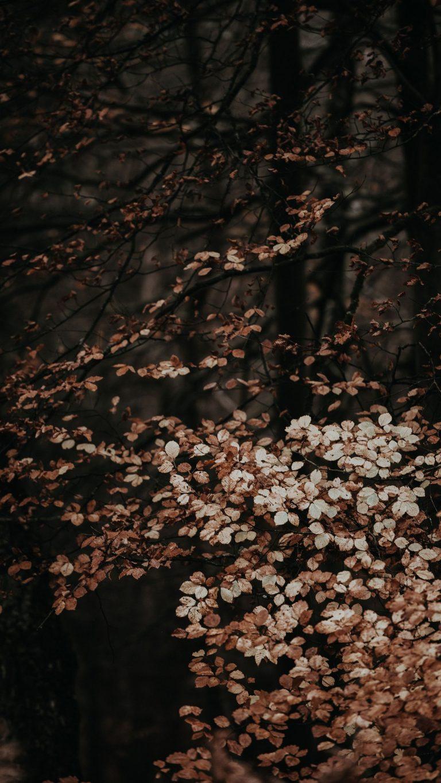 Autumn Phone Wallpaper 020 768x1365