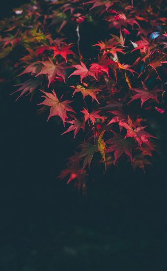 Autumn Phone Wallpaper 022 340x550