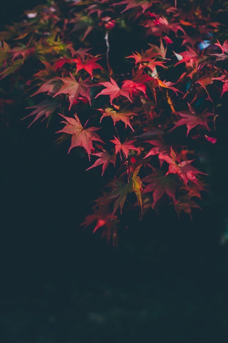 Autumn Phone Wallpaper 022 768x1154