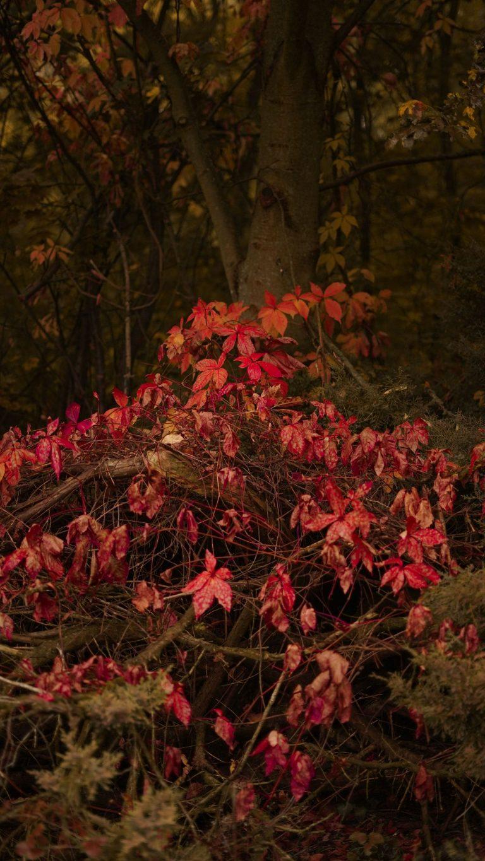 Autumn Phone Wallpaper 024 768x1365