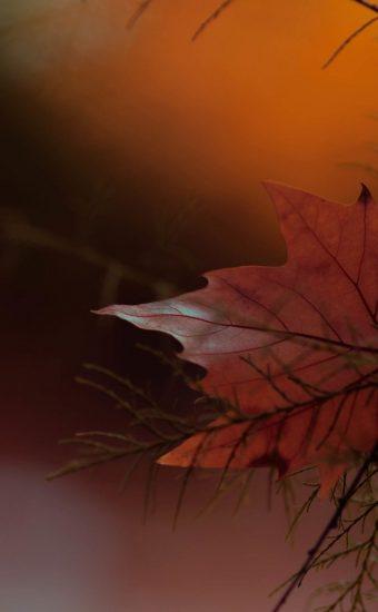 Autumn Phone Wallpaper 026 340x550