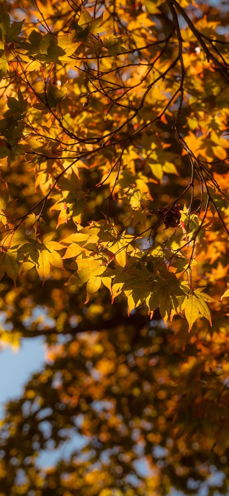 Autumn Phone Wallpaper 031 768x1664