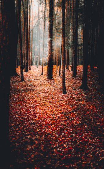 Autumn Phone Wallpaper 034 340x550