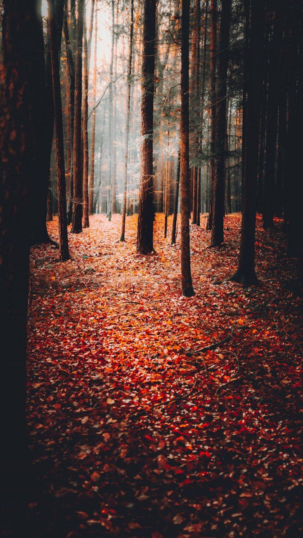 Autumn Phone Wallpaper 034 768x1365