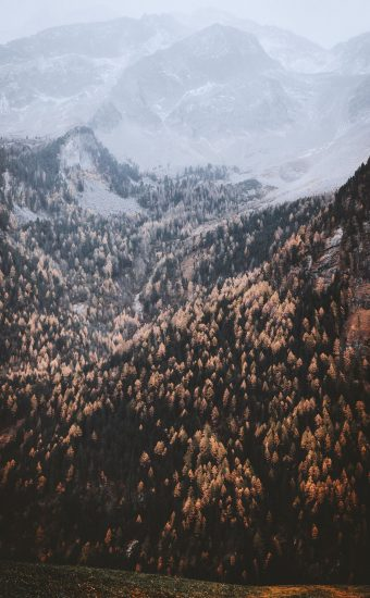 Autumn Phone Wallpaper 038 340x550