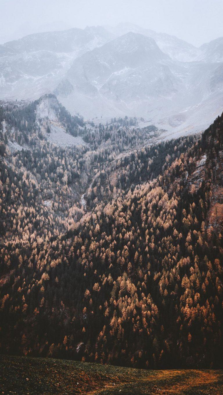 Autumn Phone Wallpaper 038 768x1365