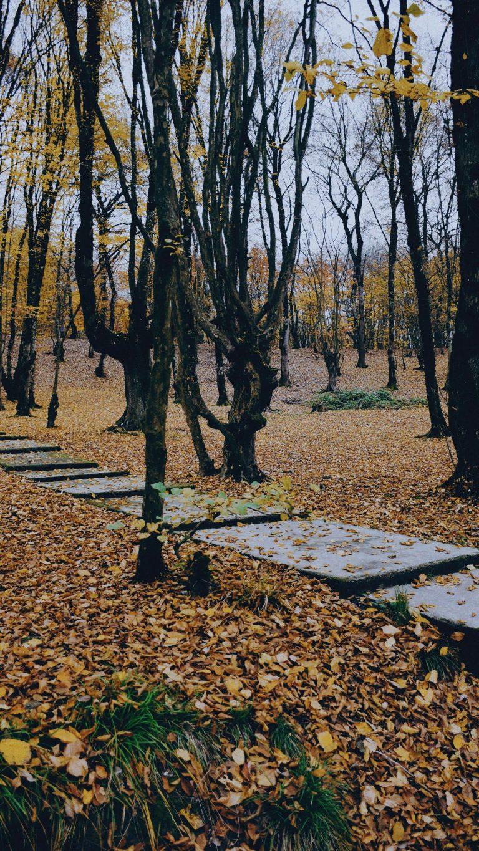 Autumn Phone Wallpaper 044 768x1365