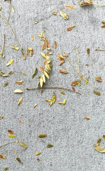 Autumn Phone Wallpaper 047 340x550